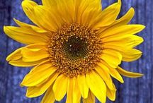 Sunshiny Day!!!!! / S U N S H I N E !!!!! ☀️☀️☀️ / by Debi Feeney