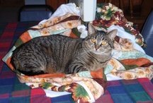 Cats On Quilts / Cats and Quilts just go together! / by Gayle Levra