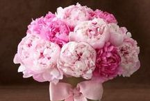so love.... peonies! /  Thank you for following me! / by Debi Feeney