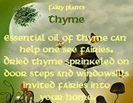 Fairy folklore