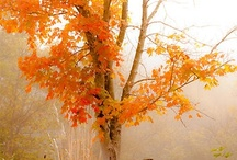 For Autumn / by Audrey Morrill