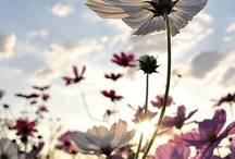 fleurs / by Monica