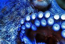 Color {Blue}