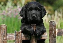 Puppies / by Megan Christine