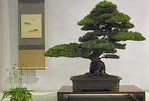 Beautiful Bonsai & Ikebana / Thanks for following me  :-) / by Donna Posey