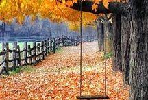 Fall is my fav! / by Samantha Bondy