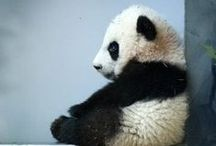 I Want A Zoo!!