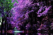 Beautiful places / by Pauline Clarke