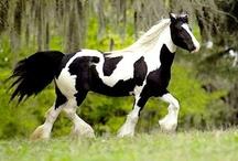 a horse is a horse... / by Cheryl Barron