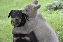 Beautiful Animals / by Katrina Gilbert