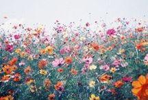 Color / by Leah Flores Designs
