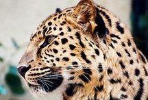 """Animal Print / Tendance """"animal print""""..."""