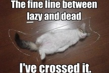 Funny: LOL!Cats / Because LOL!Cats are funny and every day should be Caturday.