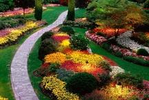Gardening & Landscape / by Mashaide Holden