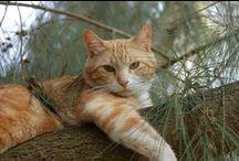 gatos / Quem odeia gatos reflete um espírito feio, estúpido, grosseiro e intolerante.  William S. Burroughs / by Susana Moura