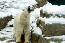 Animals in the news / by CBC News