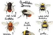 gardens for bees / Gardening for bees