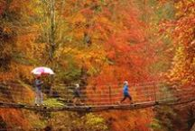 best places to see autumn colour