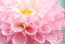 Fabulous flowers / by Carey Norton