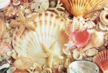 Take me to the Sea / Take me to the Sea / by Linda Rowley