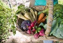 Veggie Gardening... / by Trina Leigh