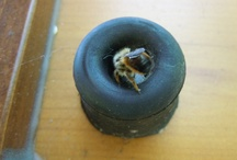 Visiteurs insolites / Les premiers mois d'occupation des roulottes, les mésanges faisaient leur nid derrière les volets en passant par les trous de volets. Voici en image l'évolution de la couvée. Par la suite, nous avons posé des nichoirs (voir le board nichoirs)