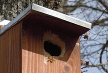 nichoirs / Pour éviter que les mésanges nichent derrière les volets des roulottes, nous leur avons fait construire 6 nichoirs