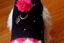 Fashion for pooches and their people / Great gift giving ideas for dogs and dog people