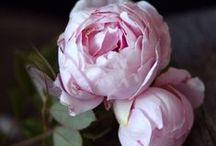 Flower inspiration / My favorite flowers