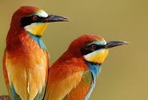 Bird Crazy / by Donna Palmer