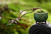 Ikebana ¬ ∫uiseki / 'Ikeßana & ∫uiseki' are beautiful natural objects, plants and minerals, including small human artificial paradises