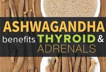 Nutritional Support & Ayurveda / 'Food is any substance consumed to provide nutritional support for the body'