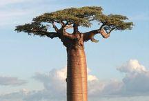 le voyage des arbres / Les voyage des arbres et palmiers travers le monde
