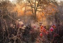 Couleur automne / by Sylvie-Catherine De Vailly