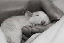 Animals / by Christine Hoffmann