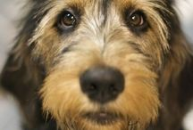 Adopt Don't Shop / Shelter pets.