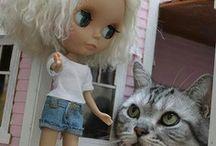 LolCat / Ces chats qui nous font rire.