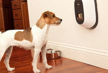 Home-Decor: Dog Stuff