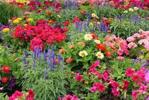 How to... Plant a flower garden