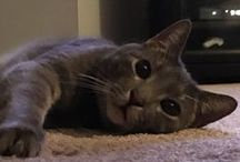 Cats / Friends for Arthur!