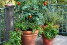 Garden & Outdoors / by Debbie Niswonger