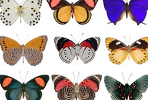 Catnap's Butterflies / by Jessica Napp McAnuff