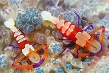 Crustacea / by Sharon Adams