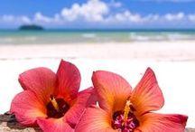 Summer Lovein! / by Morgan Holder