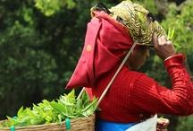 Fair Trade Empowerment
