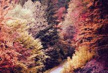 Fall / by Erin Stewart