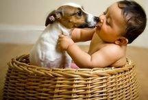 I Am Against Dog Abuse