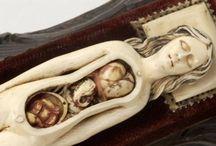 anatomy, taxidermy, skeletons