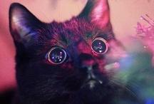 KITTY! / by Lauren Garcia