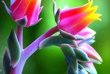 Beautiful flowers & plants